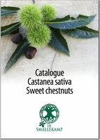 castanea sativa sweet chestnuts