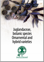 juglandaceae botanic species ornamental and hybrid varieties