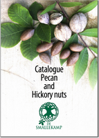 pecan and hickory nuts